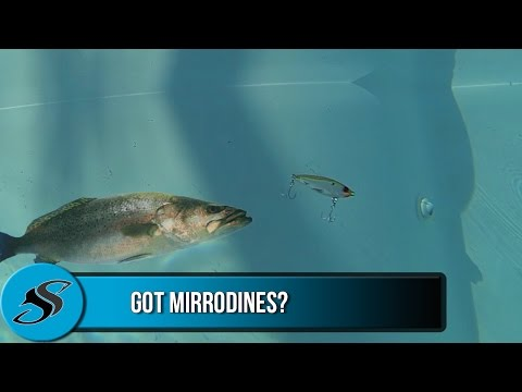 How To Fish With A MirrOdine Suspending Twitchbait