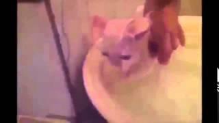 Реклама с котами  от которой у Вас лопнет живот