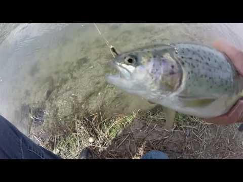 Bernalillo ditch fishing on tenkara