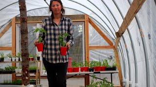 Potatoes, Perennials, & Trellises | Planting in the Garden