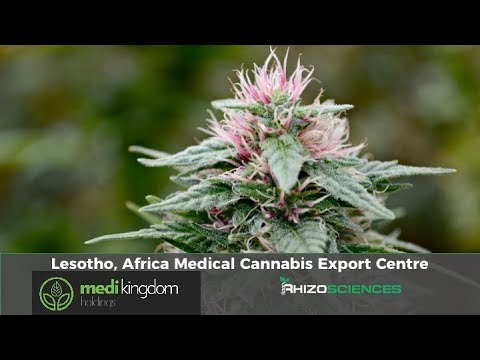 African Medical Cannabis Exports - Medi Kingdom Lesotho 2018