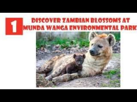 Zambia Tourist Attractions: 6 Top Places to Visit