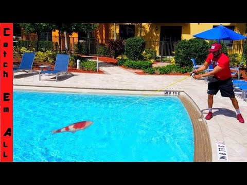 FISHING in POOL to Catch Exotic Fish!