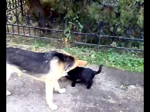 собака котенок и кошка.mp4 - YouTube