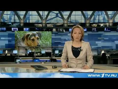 Выращивание огурцов в теплицы смотреть видео