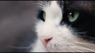 Город кошек — русский трейлер (в кино с 30 ноября)
