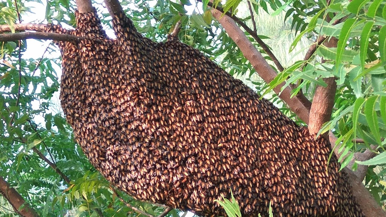 Honey Destruction In My Village