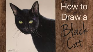 Cat Drawing Tutorial With Colored Pencils - By Artist: Andrea Kirk   The Art Chik