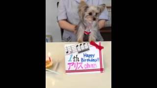 アリスちゃん、1才のお誕生日おめでとう。これからもずーっと元気に、...
