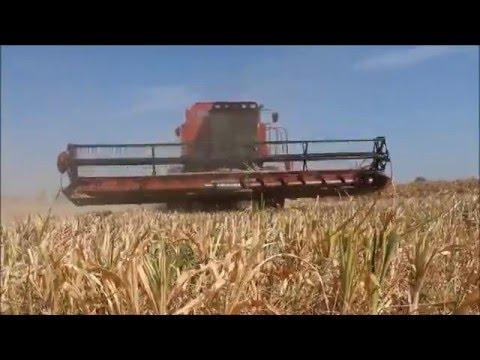 Harvest Sudan 2016
