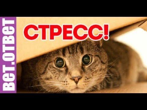 Как проявляется стресс у кошки