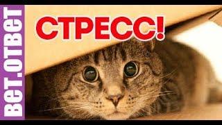 Как помочь кошке при стрессе! ВетОтвет