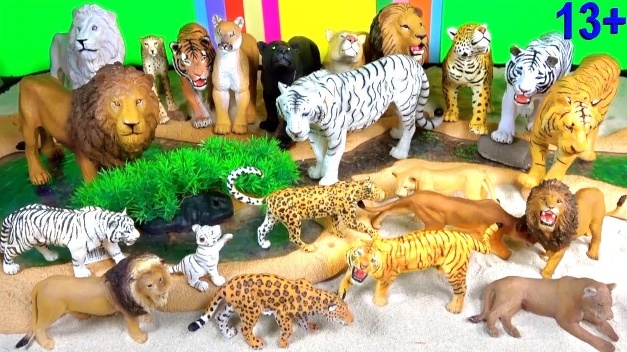 Wild ZOO Animals Learn about Wild Animals LION TIGER LEOPARD CHEETAH BIG CATS Big Cat Week 2019 13+