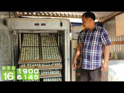 Phục hồi đời sống và sản xuất hậu Covid-19   VTC16