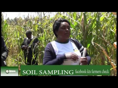 SOIL SAMPLING -farmers check kts tv kenya