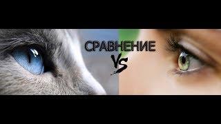 Сравнение глаза кошки и человека / Как кошки видят наш мир и многое другое