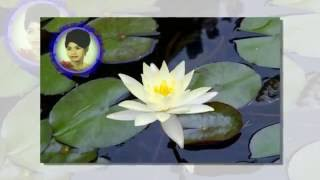 Ros Sereysothea Preat Muoy Chey Vet Khmer Old Song Cambodia Music MP3