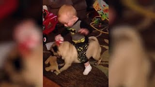 When Babys and Dogs are best Friends in the World! | Cute baby dog complication | November 2018