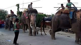 Pagal hathi  पागल हाथी