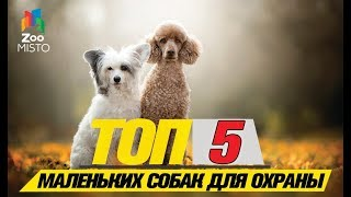 Топ 5 маленьких собак для охраны\Top 5 small dogs to guard