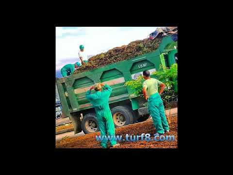 20mm Garden Field Grass Clean Artificial Lawn Local purchase