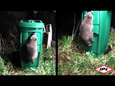 Raccoon-resistant green bin coming to Peel Region