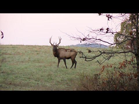 Arkansas Wildlife - S1 E3, Arkansas Elk Hunt and Joe Mosby Tribute
