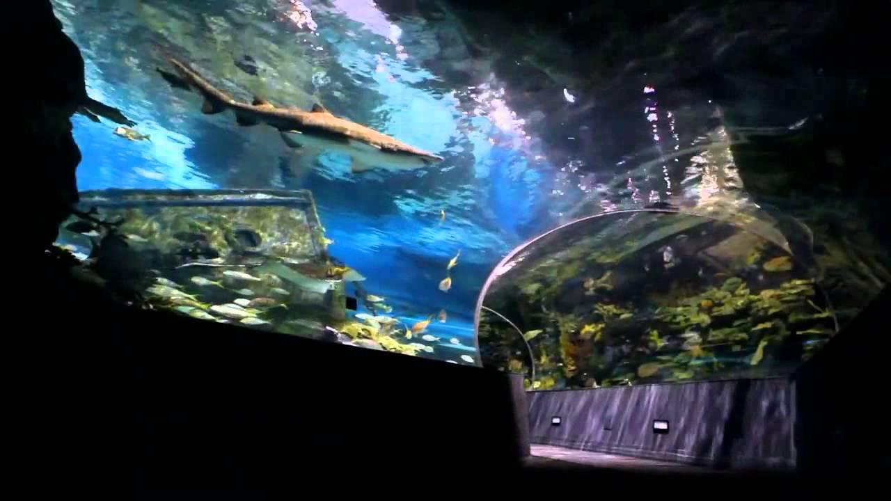 Antalya Aquarium - YouTube