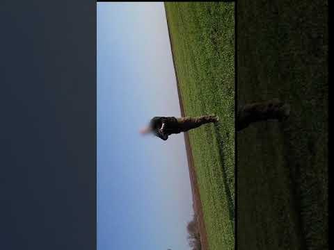 Videóra vették, amint egy vadőr a levegőbe lőve próbál elzavarni egy kutyasétáltatót