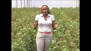 Horticulture Training Centre Opens in Kenya