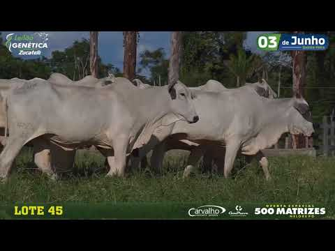 LOTE 045