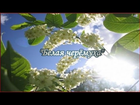 Песни из кинофильма черёмухи цвет