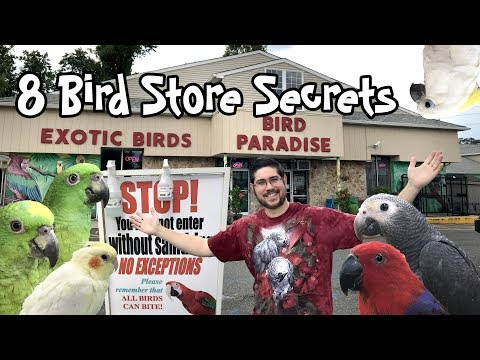 8 Bird Store Secrets Bird Stores Won't Tell You!