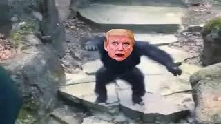 Trump the shit flinging monkey.