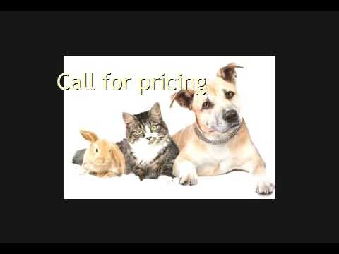 Need Pet Transport To Baghdad Call Animals Away
