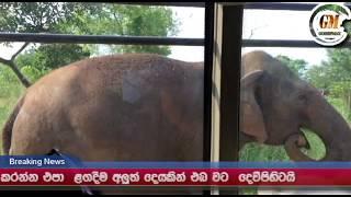 elephant attack bus srilanka