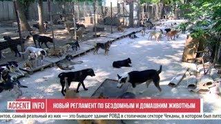 Новый регламент по бездомным и домашним животным