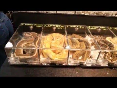 Baltimore Repticon Jan 2016 and Pickups