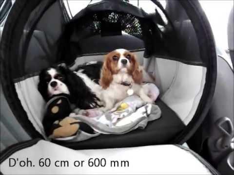 car carrier for dog
