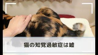 知覚 過敏 猫