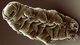 What are Tardigrades? | Earth Unplugged