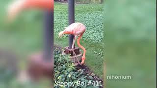 Steppy Boi #411
