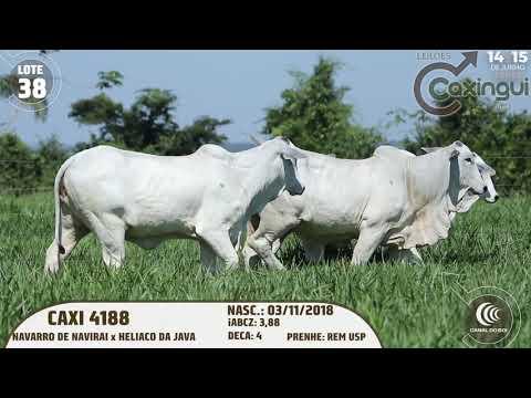 LOTE 38   CAXI 4188, CAXI 4124, CAXI4398