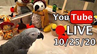 Einstein Parrot LIVE! 10/25/20 Halloween!  instein Parrot