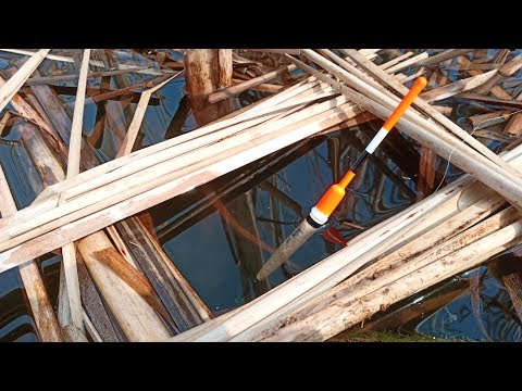 Рыбалка в ОКНАХ КАМЫША | КРУПНЫЙ КРАСНОПЕР
