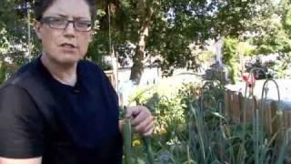 Growing Garlic - and Garlic Rust 101