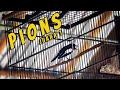 Kembali Lagi Kacer Pions Sebagai Juara  Di Lomba  Mp3 - Mp4 Download