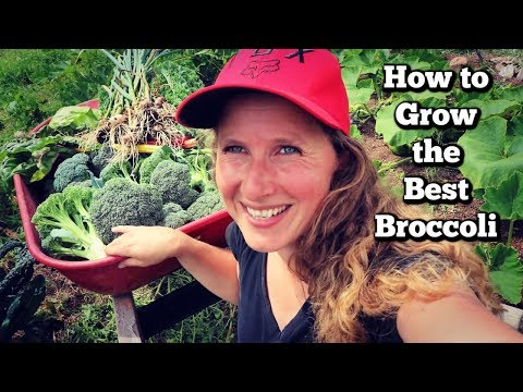 How to Grow Amazing Broccoli | Tips, Tricks and Troubleshooting