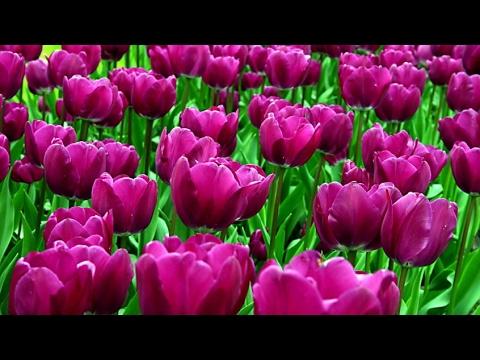 🌹Букет от флориста в красных тонах!из YouTube · Длительность: 54 с  · Просмотров: 163 · отправлено: 05.04.2017 · кем отправлено: Flora2000.ru - доставка цветов