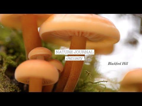 Nature Journal • January • Blackford Hill